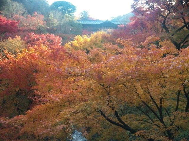 東福寺 紅葉 2014.jpg